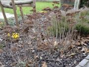 cistenie od listov a odvitnutých častí  rastlín