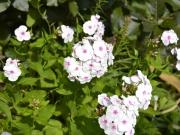 Júl v záhrade
