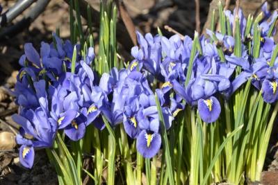 Jarná údržba záhrady